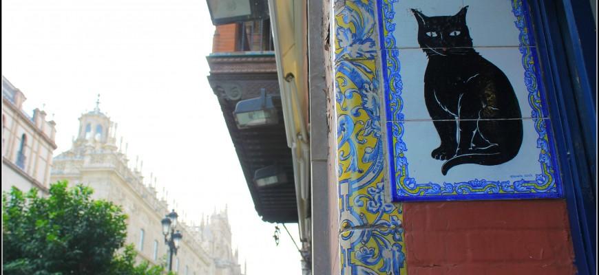 kiosko gato negro seville