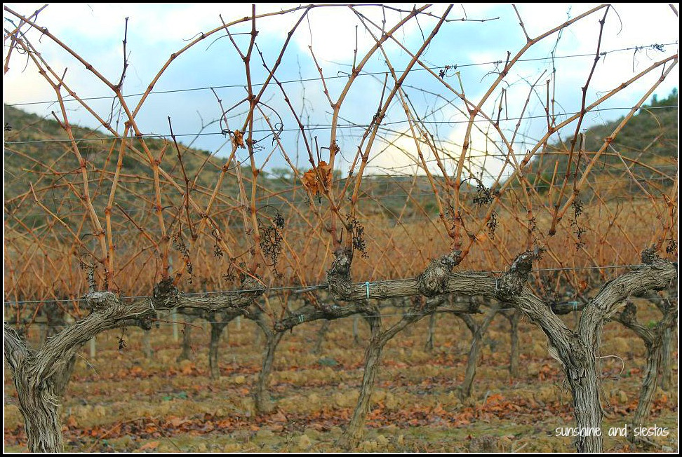 wine branches in la rioja