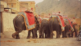 Elephant Riding in Rajasthan Good Idea, Bad Idea - Elephants