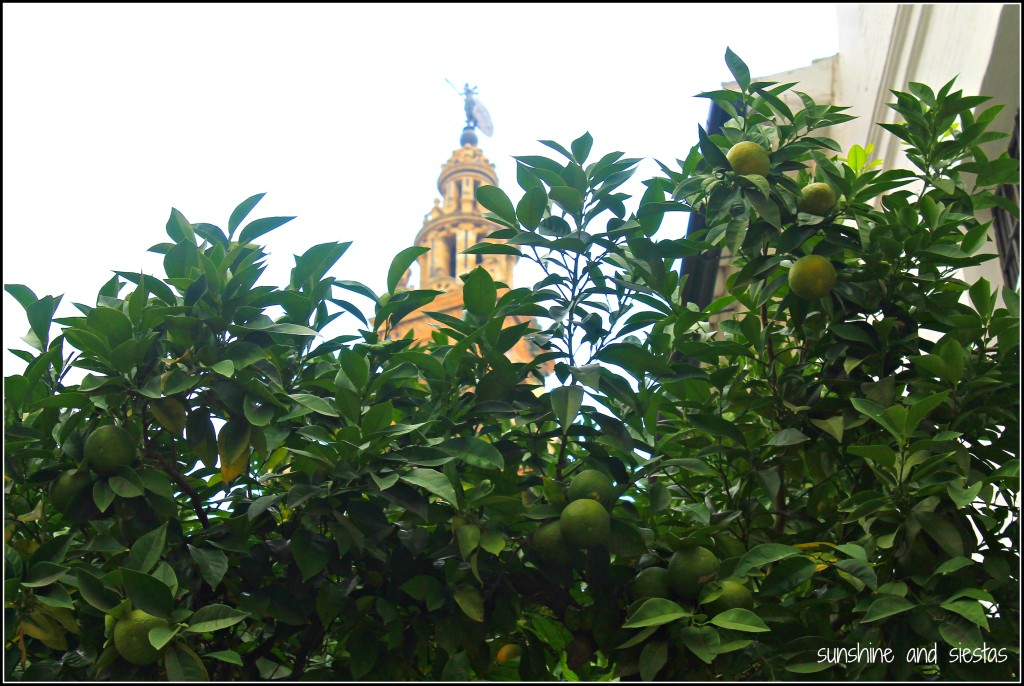 Oramge trees in Seville